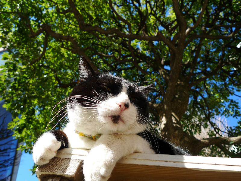 ベンチでうつらうつらしてるネコ
