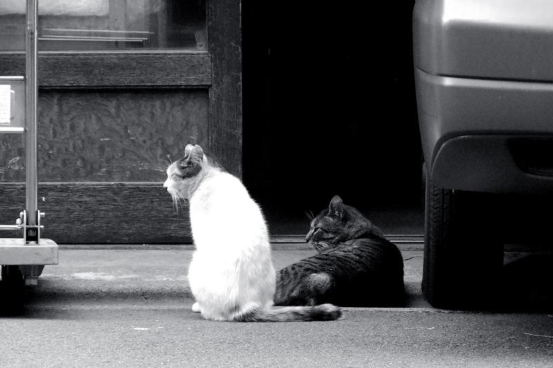 商店の前の猫2匹をモノクロで