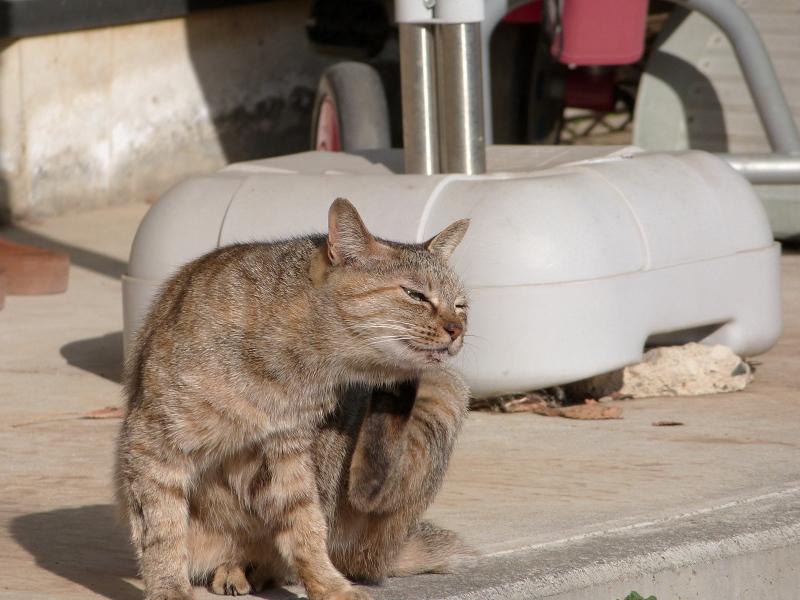 冬日射しの下でカキカキしてるネコ