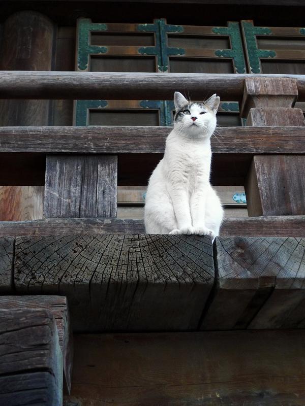 寺の欄干から遠くを見るネコ