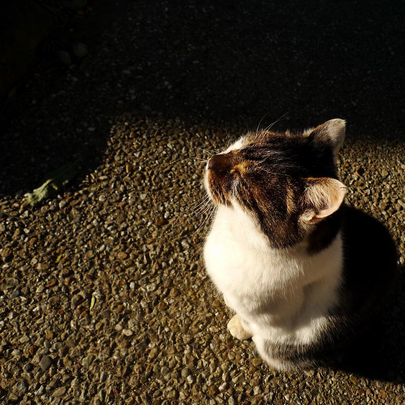 物思いに耽ってる感じのネコ