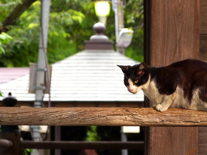 お寺の濡れ縁の手摺に乗ってる猫