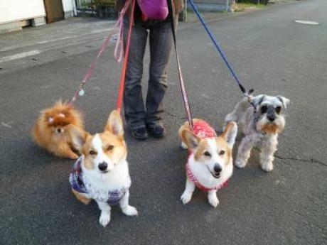sophia,chelsea,kenken&moko
