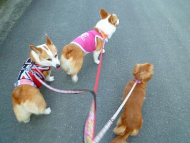 sophia,chelsea&momo
