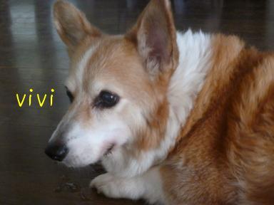 vivian110818