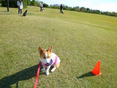 吉田公園レッスンchelsea111112