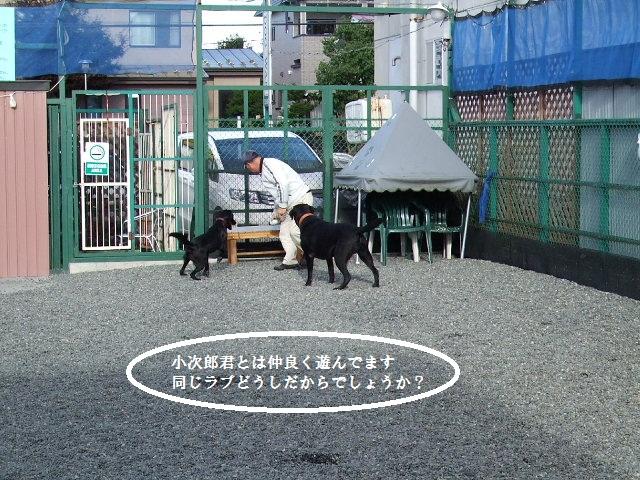 BLOG7131.jpg