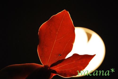 秋のお土産 -w