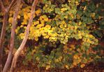4.樹の葉-08Pt