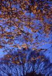 2.秋の木立-03P 03qt