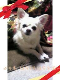 picute20121211134729.jpg
