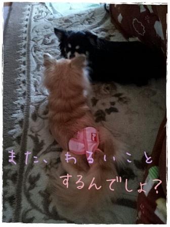 picute20130209182432.jpg