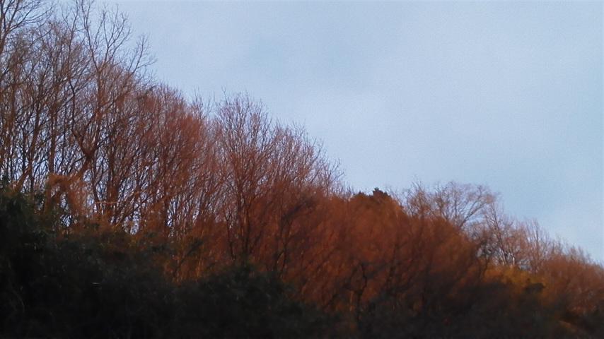 オレンジ色の木々