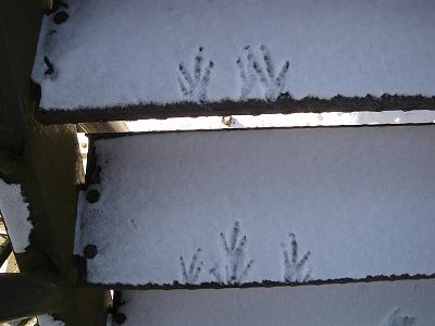 カラスの足跡