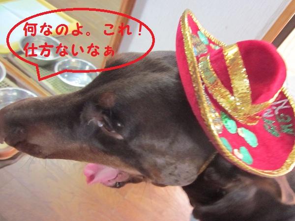 01_20121122074515.jpg