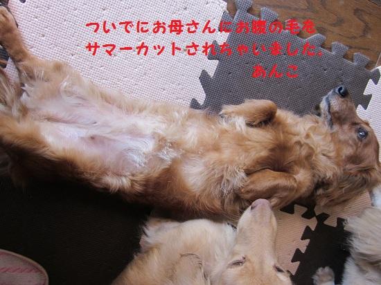 02_20120517075217.jpg