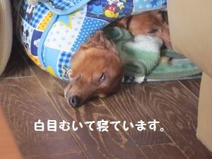 03_20120510092116.jpg