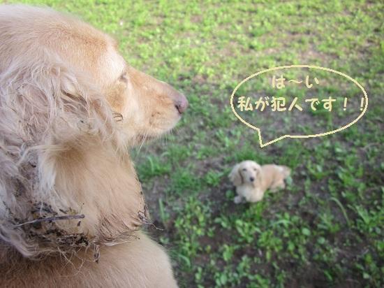 06_20120530081639.jpg