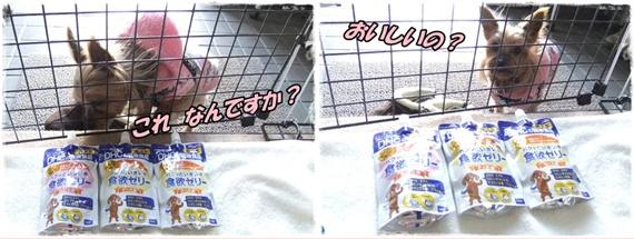 2014_0131ガンバレ ラッキー0017-tile
