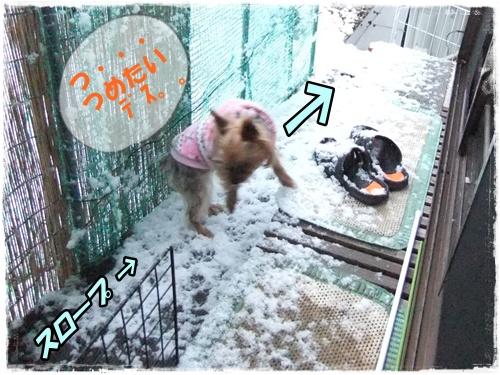 2014_0208雪と脾臓・・0004