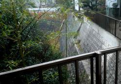 朝から雨20121228