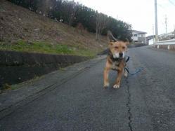 散歩20121226-3