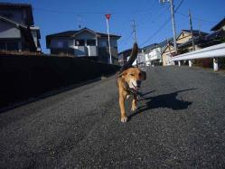 散歩20121227-1