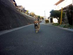 散歩20121227-2