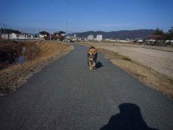 散歩20121227-3