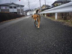 散歩20121229-3