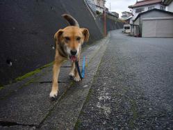 散歩20121229-4