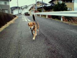 散歩20121230-1