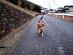 散歩20121230-2