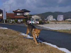 散歩20121231-2