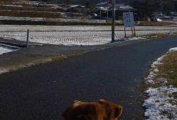 散歩20121231-3