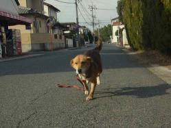 散歩20130126-1