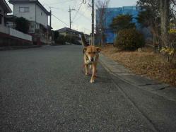 散歩20130126-2