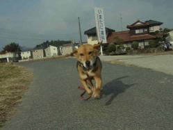 散歩20130126-3
