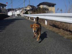 散歩20130127-2