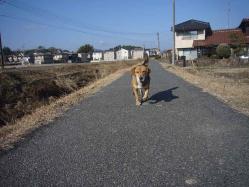 散歩20130127-3