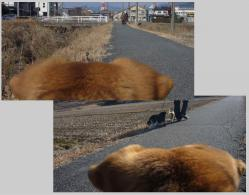 散歩20130127-4