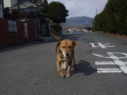 散歩20130128-1