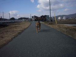 散歩20130128-3