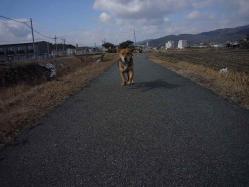 散歩20130128-4