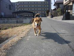 散歩20130129-2