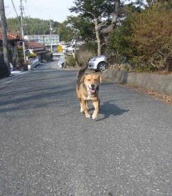 散歩20130129-3