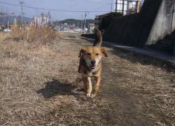 散歩20130129-4