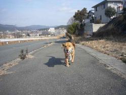 散歩20130129-5