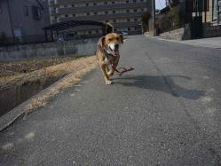 散歩20130130-1