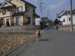 散歩20130130-2
